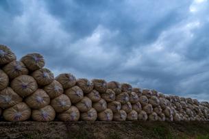 籾殻を詰めたビニール袋と雲底の写真素材 [FYI03349122]