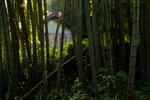 竹林と納屋の写真素材 [FYI03349124]
