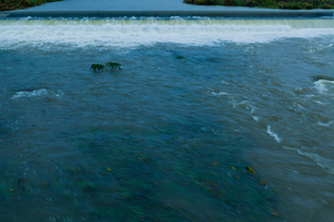 雨で増水した意宇川の写真素材 [FYI03349136]