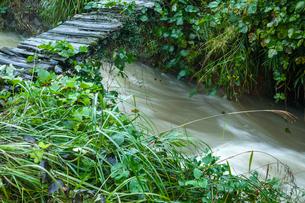 増水した小川と木橋の写真素材 [FYI03349141]