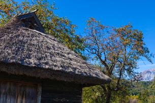 茅葺の納屋と柿の写真素材 [FYI03349161]