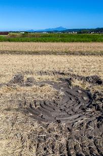 刈入れ終えた田んぼに残るコンバインの回転跡と伯耆大山の写真素材 [FYI03349240]
