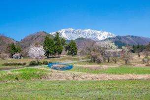 春の山里と大山の写真素材 [FYI03349278]