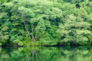 水辺の新緑の写真素材 [FYI03349333]
