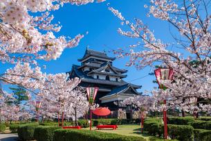 桜咲く松江城の写真素材 [FYI03349426]