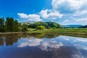 棚田の水鏡に映る大山の写真素材 [FYI03349472]