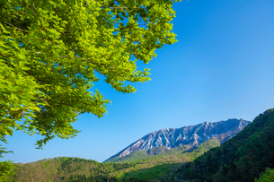 大山南壁と新緑の写真素材 [FYI03349488]