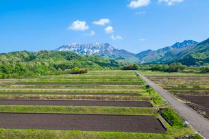 棚田と大山南壁の写真素材 [FYI03349493]