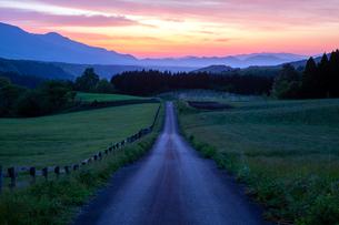夜明けの道の写真素材 [FYI03349495]