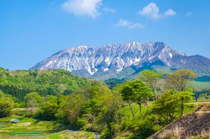 大山南壁と新緑の写真素材 [FYI03349498]