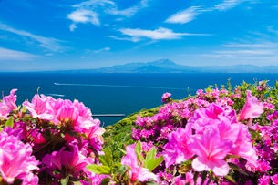 ツツジ咲く関の五本松公園から眺める大山の写真素材 [FYI03349505]