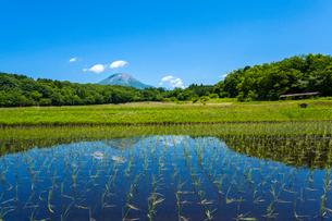 早苗植わる棚田と大山の写真素材 [FYI03349513]