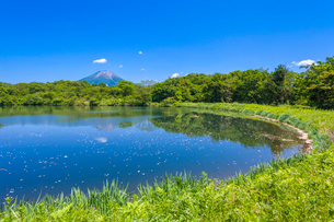 新緑の溜池と大山の写真素材 [FYI03349514]