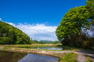新緑に囲まれた田圃の写真素材 [FYI03349527]