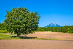 大樹と大山の写真素材 [FYI03349539]