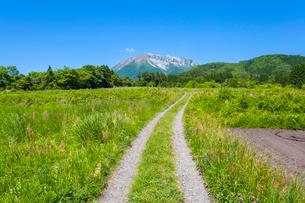 耕地に続く轍道と大山の写真素材 [FYI03349542]