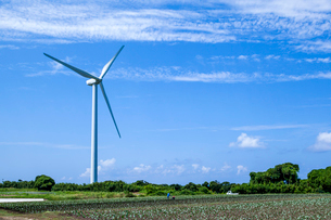 風力発電の風車と畑の写真素材 [FYI03349554]
