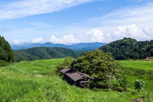 夏の棚田と稲架小屋の写真素材 [FYI03349555]