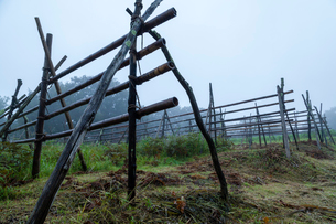 雨に濡れる稲架木の写真素材 [FYI03349573]