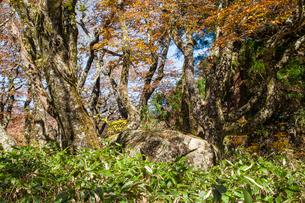 比婆山の御陵の写真素材 [FYI03349634]