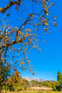 柿実る山里と大山南壁の写真素材 [FYI03349721]