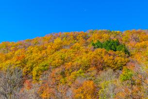 黄葉の山肌と半月の写真素材 [FYI03349724]