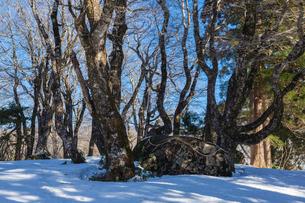 比婆山の御陵の写真素材 [FYI03349733]