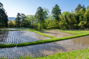 新緑に囲まれる湿田の写真素材 [FYI03349772]
