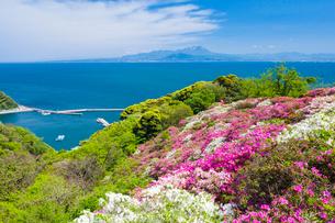 ツツジ咲く五本松公園と大山の写真素材 [FYI03349859]