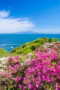 ツツジ咲く五本松公園と大山の写真素材 [FYI03349860]