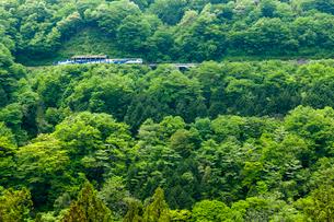 新緑を走るトロッコ列車の写真素材 [FYI03349862]