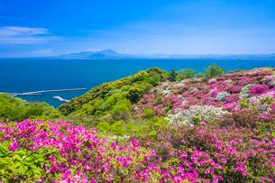 ツツジ咲く五本松公園と大山の写真素材 [FYI03349895]