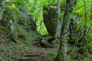 比婆山の千引岩の写真素材 [FYI03349903]