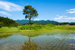 カンナ残丘と船通山の写真素材 [FYI03349907]
