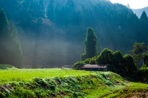 朝靄漂う棚田と里山の写真素材 [FYI03349929]
