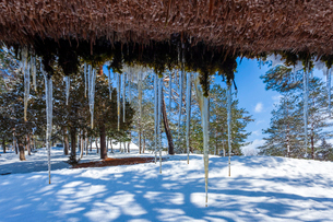 茅葺屋根から垂れる氷柱の写真素材 [FYI03350084]