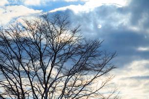 冬ざれの小梢と雲間の太陽の写真素材 [FYI03350112]