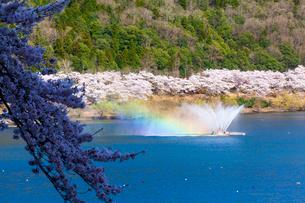 虹かかる土師ダムの噴水と桜並木の写真素材 [FYI03350205]