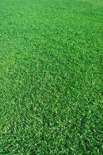 芝生の写真素材 [FYI03350854]