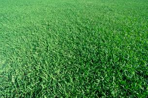 芝生の写真素材 [FYI03350856]
