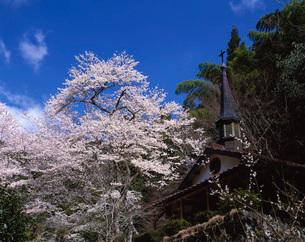 春の写真素材 [FYI03350884]