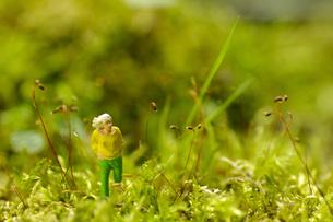 ミニチュアグリーンワールド「お散歩」の写真素材 [FYI03351094]