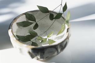 椀の中に浮かぶ葉の写真素材 [FYI03351121]