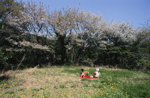 春のピクニックの写真素材 [FYI03351252]