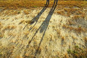 2人の子供の影の写真素材 [FYI03351350]