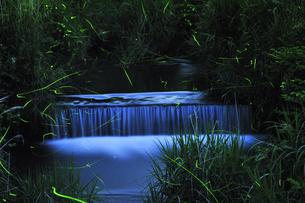 ホタルの光と小川の写真素材 [FYI03351416]