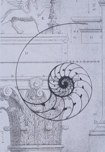 オウム貝と専門書のイメージ  B&Wの写真素材 [FYI03351420]