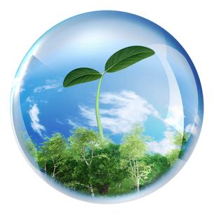 ガラス球内に森と新芽のイラスト素材 [FYI03351763]