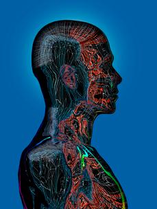 内面の質感が浮き上がる先進ロボットのプロフィールのイラスト素材 [FYI03351933]
