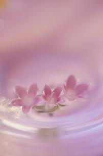 水に浮かぶ花の写真素材 [FYI03352116]